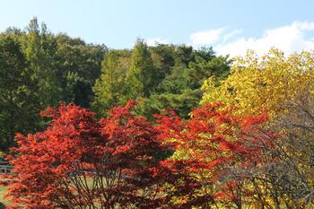 尾鈴山の紅葉縮小.jpg